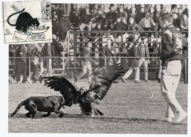 Main image: Margo, during a home football game against the University of Detroit. Inset: The 1920 Boston Herald cartoon that prompted the search for a mascot. Clipping: Boston Herald. Photograph: Boston Public Library. Click images to enlarge.