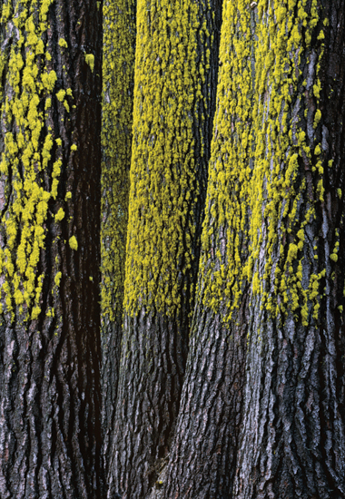Lichens, Yosemite National Park, California. Photograph: William Neill
